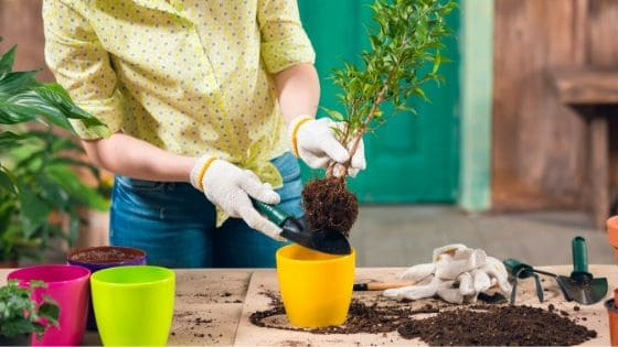 a woman doing some fun simple gardening